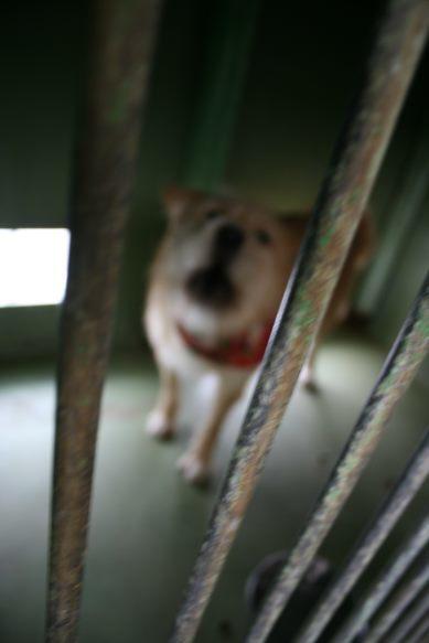 【移動先募集】センター(支所)収容犬(12/25訪問)_f0242002_00591258.jpg