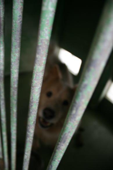 【移動先募集】センター(支所)収容犬(12/25訪問)_f0242002_01013022.jpg