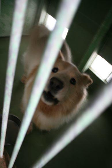 【移動先募集】センター(支所)収容犬(12/25訪問)_f0242002_01013803.jpg
