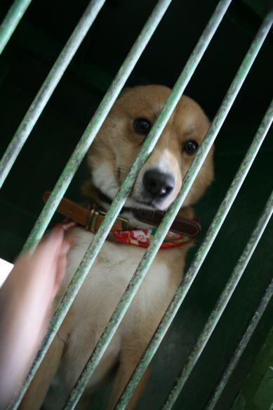 【移動先募集】センター(支所)収容犬(12/25訪問)_f0242002_01014633.jpg