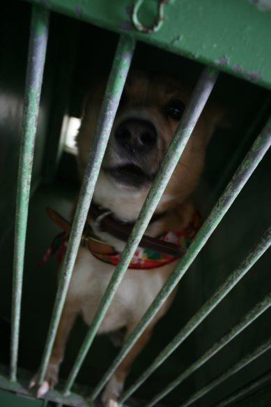 【移動先募集】センター(支所)収容犬(12/25訪問)_f0242002_01015450.jpg