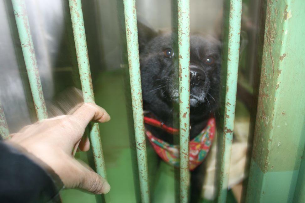 【移動先募集】センター(支所)収容犬(12/25訪問)_f0242002_01130558.jpg