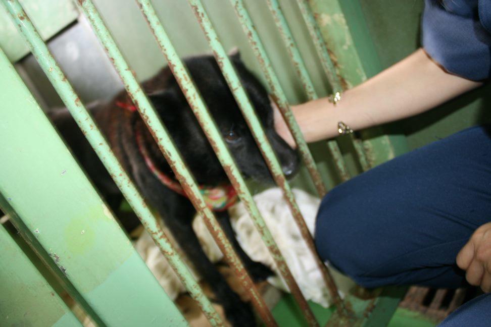 【移動先募集】センター(支所)収容犬(12/25訪問)_f0242002_01131645.jpg