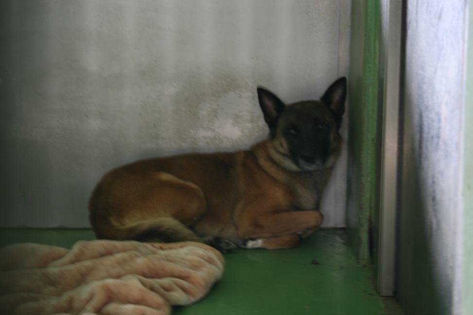 【移動先募集】センター(支所)収容犬(12/25訪問)_f0242002_01132246.jpg
