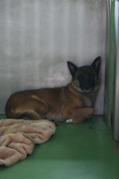 【移動先募集】センター(支所)収容犬(12/25訪問)_f0242002_01132797.jpg