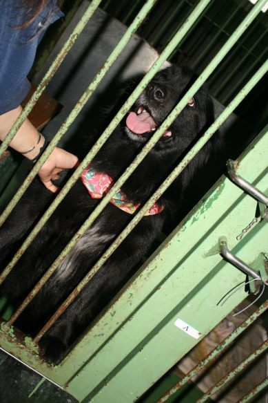 【移動先募集】センター(支所)収容犬(12/25訪問)_f0242002_01133701.jpg