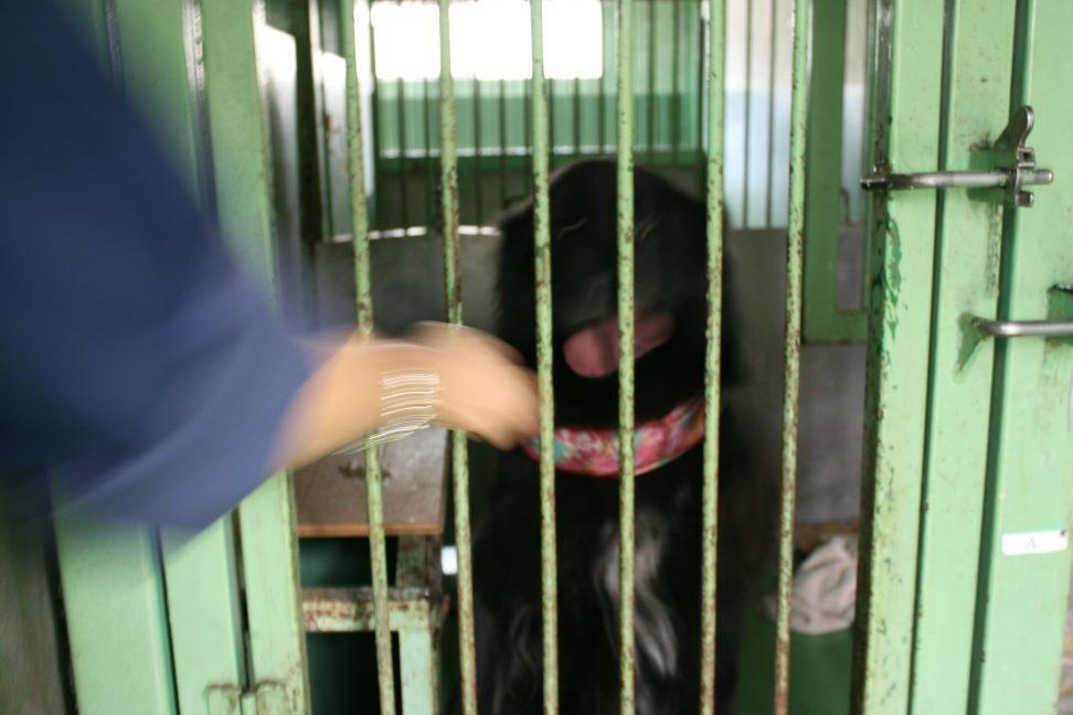 【移動先募集】センター(支所)収容犬(12/25訪問)_f0242002_01135502.jpg