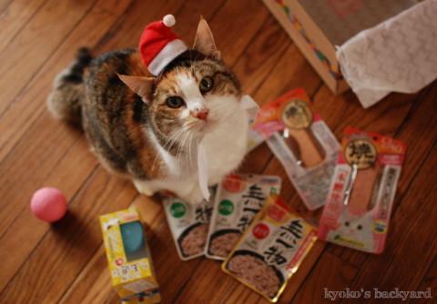 猫たちのクリスマス2016 (動物・ペット部門)_b0253205_03300580.jpg