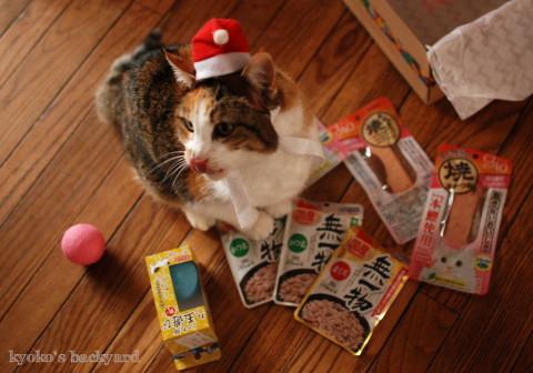 猫たちのクリスマス2016 (動物・ペット部門)_b0253205_03305085.jpg