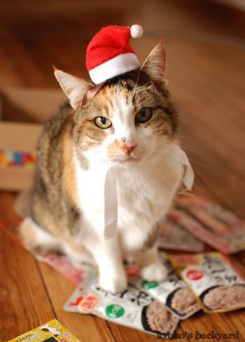 猫たちのクリスマス2016 (動物・ペット部門)_b0253205_03313606.jpg