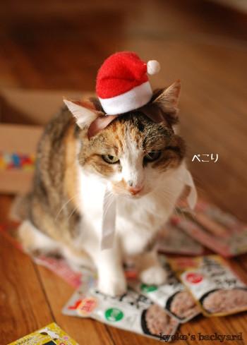 猫たちのクリスマス2016 (動物・ペット部門)_b0253205_03332927.jpg