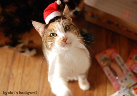 猫たちのクリスマス2016 (動物・ペット部門)_b0253205_03362468.jpg