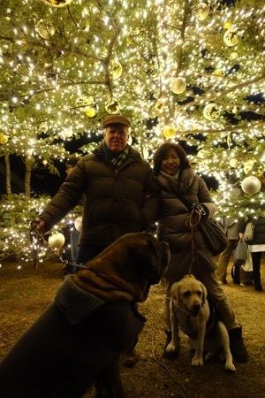 ハルニレ、クリスマスイルミネーションからの沢村(動物ペット部門)_e0192217_21282087.jpg