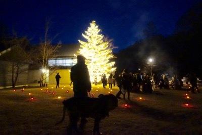 ハルニレ、クリスマスイルミネーションからの沢村(動物ペット部門)_e0192217_21282398.jpg