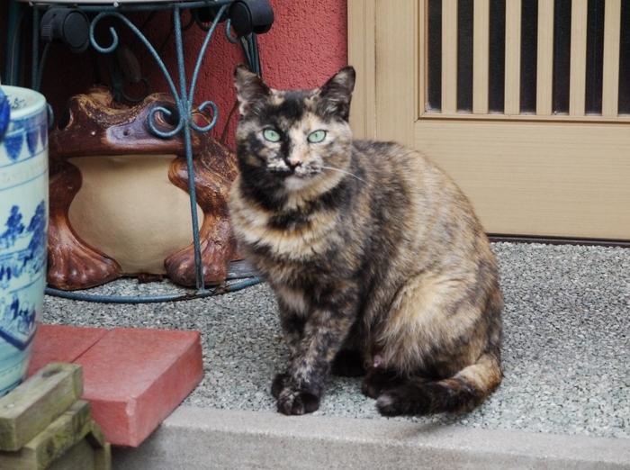 街で見かけた猫_b0093754_22495029.jpg