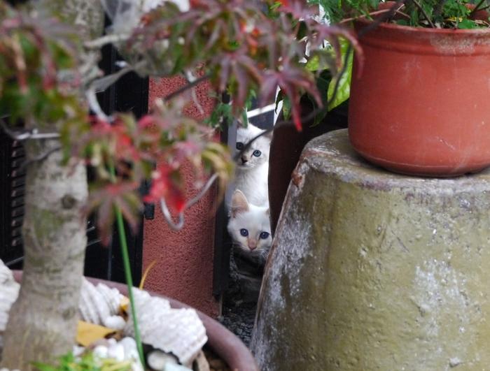 街で見かけた猫_b0093754_2250135.jpg