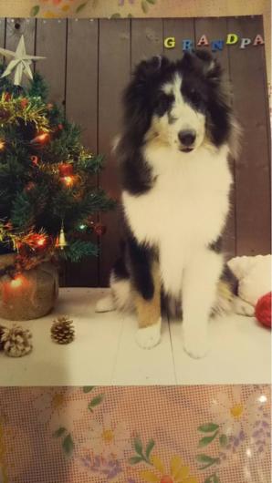 クリスマスと年末_f0126965_13475830.jpg