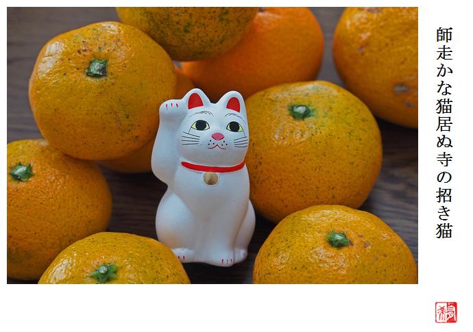 猫! 初・豪徳寺_a0248481_22004476.jpg