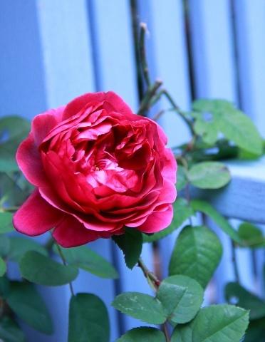◆今年最後の庭仕事_e0154682_22475601.jpg