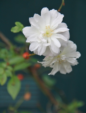 ◆今年最後の庭仕事_e0154682_22482051.jpg
