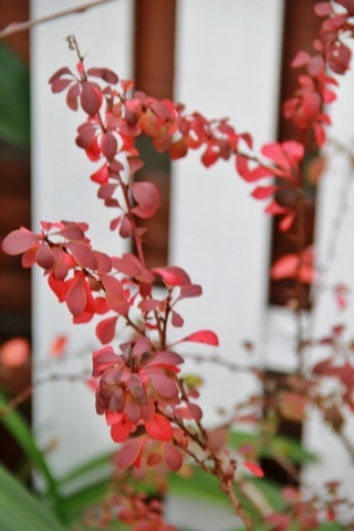 ◆今年最後の庭仕事_e0154682_22491378.jpg