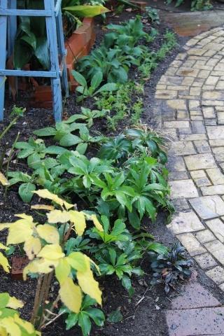 ◆今年最後の庭仕事_e0154682_23464771.jpg