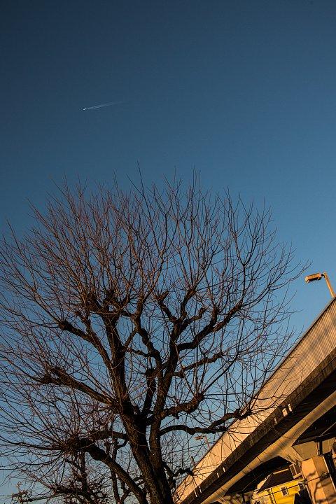 黄昏のペデストリアンデッキにまとわりつく光蜥蜴 (写真部門)_d0353489_221369.jpg