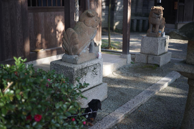 DRズミクロン50mmF2で 八坂神社へ_b0069128_14442844.jpg