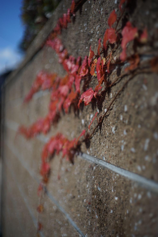 DRズミクロン50mmF2で 八坂神社へ_b0069128_159276.jpg