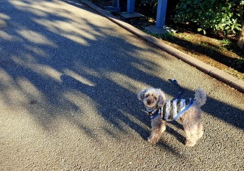 大きくなるな、自分に囚われるな 小川洋子「猫を抱いて象と泳ぐ」_e0016828_10265017.jpg