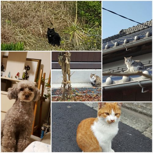大きくなるな、自分に囚われるな 小川洋子「猫を抱いて象と泳ぐ」_e0016828_10304283.jpg