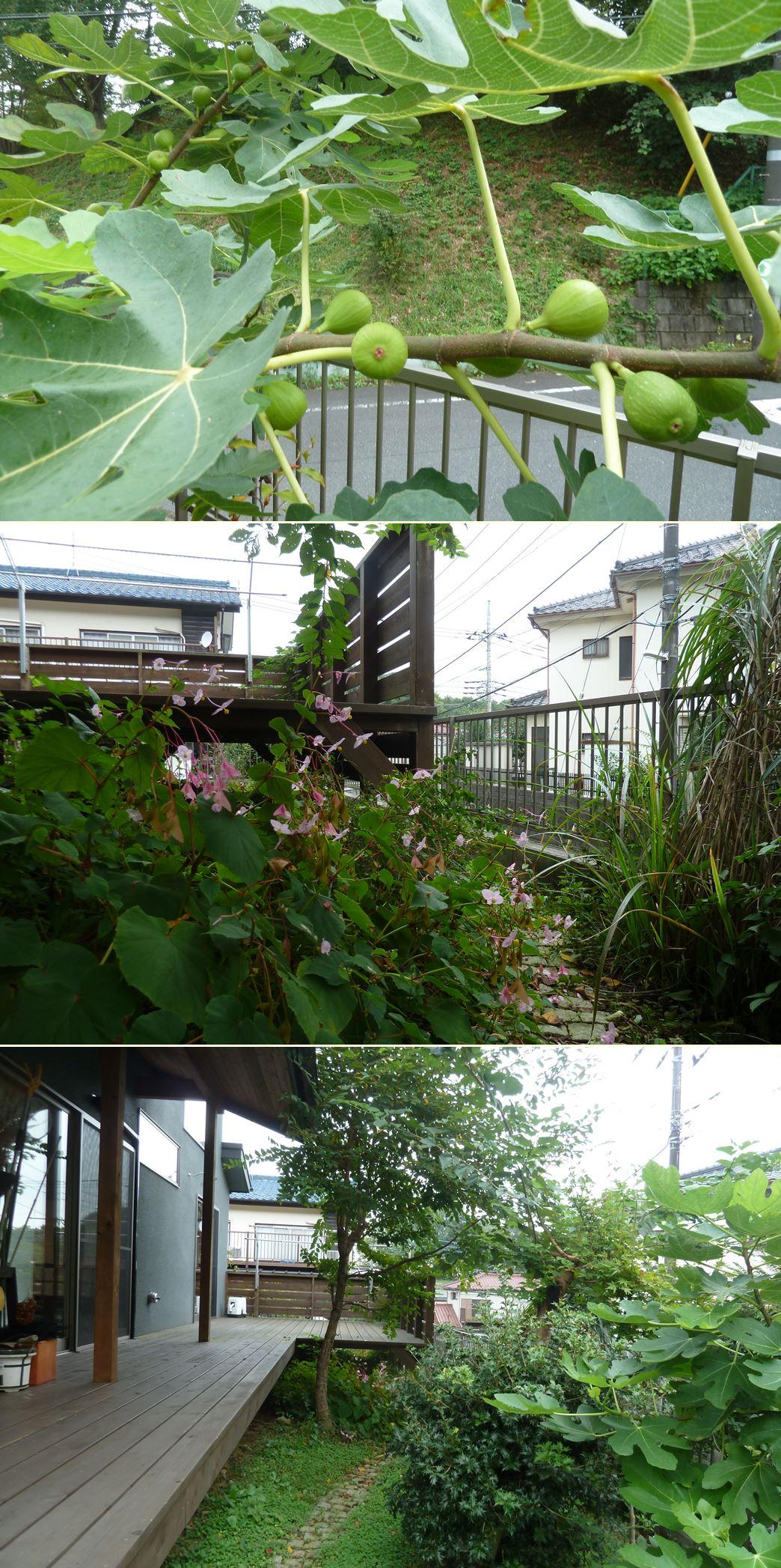 高尾の家☆味わいのあるお庭に_c0152341_23414596.jpg