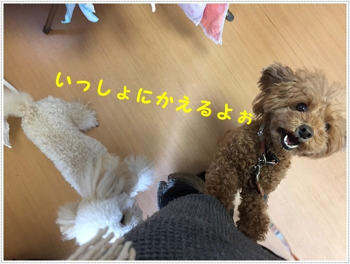 b0175688_20432360.jpg