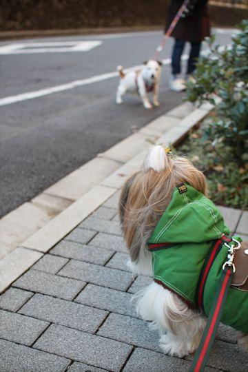 今日のお散歩&「家庭画報」_c0090198_18245198.jpg