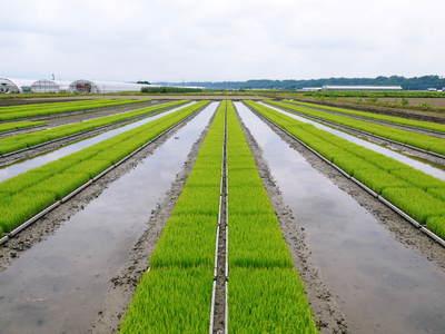 安全で美味しい熊本のお米を紹介!その1:惜しまぬ手間ひまの「七城米 長尾さんちのこだわりのお米」_a0254656_14325462.jpg