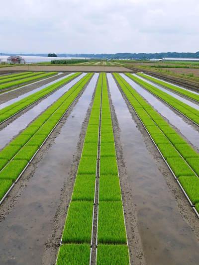安全で美味しい熊本のお米を紹介!その1:惜しまぬ手間ひまの「七城米 長尾さんちのこだわりのお米」_a0254656_1494048.jpg