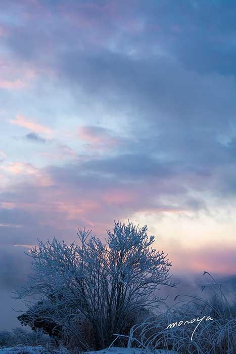 霧氷の朝_c0085877_64621100.jpg