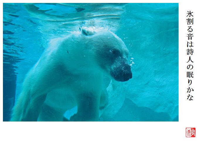 泳ぐシロクマ_a0248481_09361638.jpg