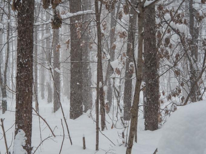 昼間の激しい吹雪・・今年は本当に雪が多いですね!_f0276498_21213101.jpg