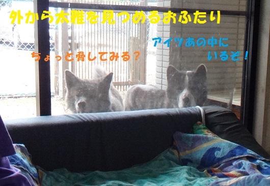 f0121712_22574349.jpg