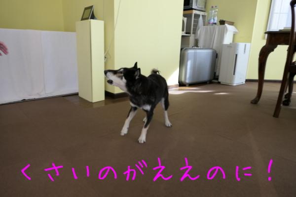ジェンちゃんも新年の準備^^_f0369014_16211724.jpg