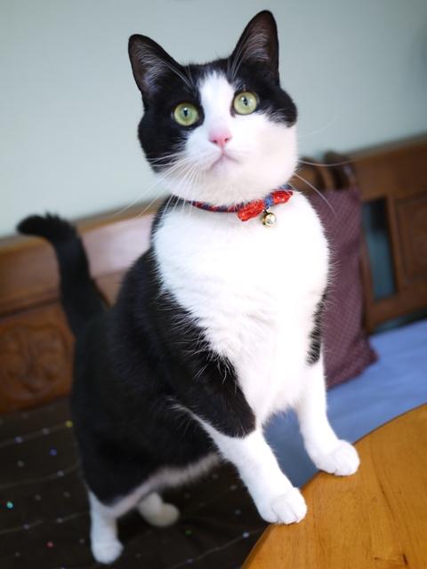 猫のお留守番 ハナちゃん編。_a0143140_22202016.jpg