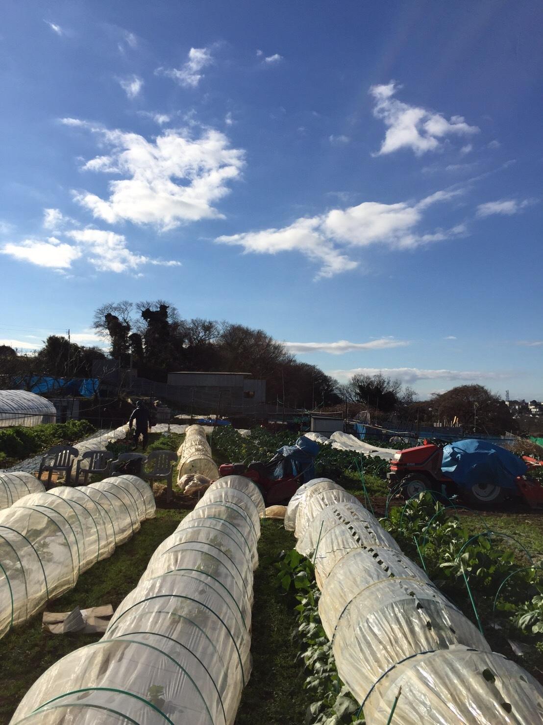 今日で畑仕事納めです ブロッコリー 小松菜 菜の花 カーヴォロネーロ レタス ルッコラを中心に収穫です_c0222448_14365082.jpg