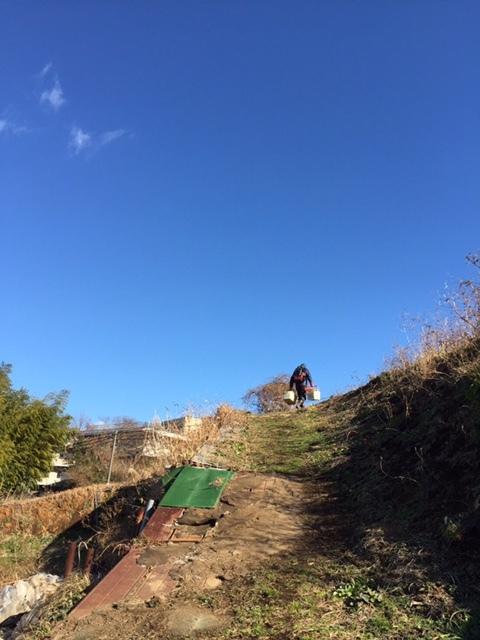 今日で畑仕事納めです ブロッコリー 小松菜 菜の花 カーヴォロネーロ レタス ルッコラを中心に収穫です_c0222448_14384498.jpg