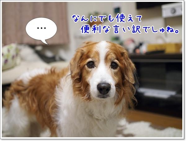 d0013149_00475512.jpg