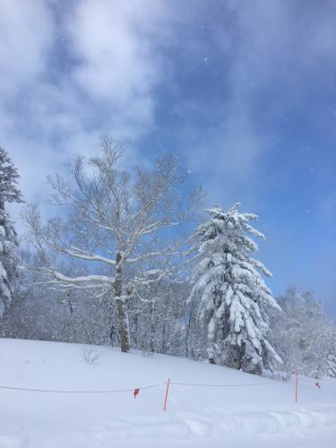 富良野スキー場⭐︎2日目はバッフバフ🌟_c0151965_15243100.jpg