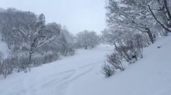 富良野スキー場⭐︎秘密のポイント_c0151965_15301689.jpg