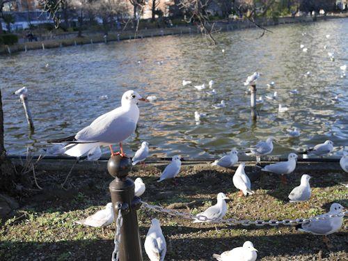 上野公園(ラスコー展)へ_c0090198_1851216.jpg