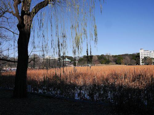 上野公園(ラスコー展)へ_c0090198_18513845.jpg