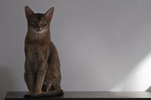 [猫的]Happy new year! 謹賀新年_e0090124_21595199.jpg